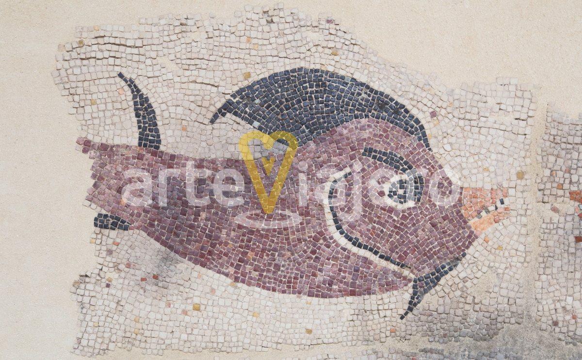mosaico romano de los peces